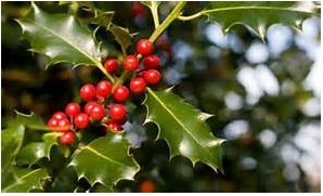 christmas plants, how to decorate christmas with plants, beautiful plants to decorating christmas