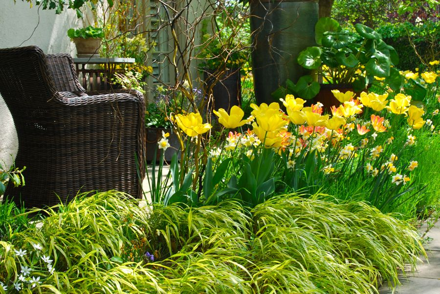 Another nice place for a sit to enjoy the tulip display which is beautifully edged with the yellow Japanese forest grass, Hakonechloa aureola.