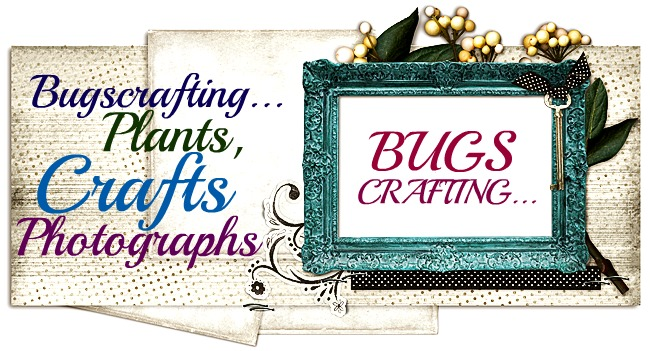 BugsCrafting.. plants, crafts and photographs.....