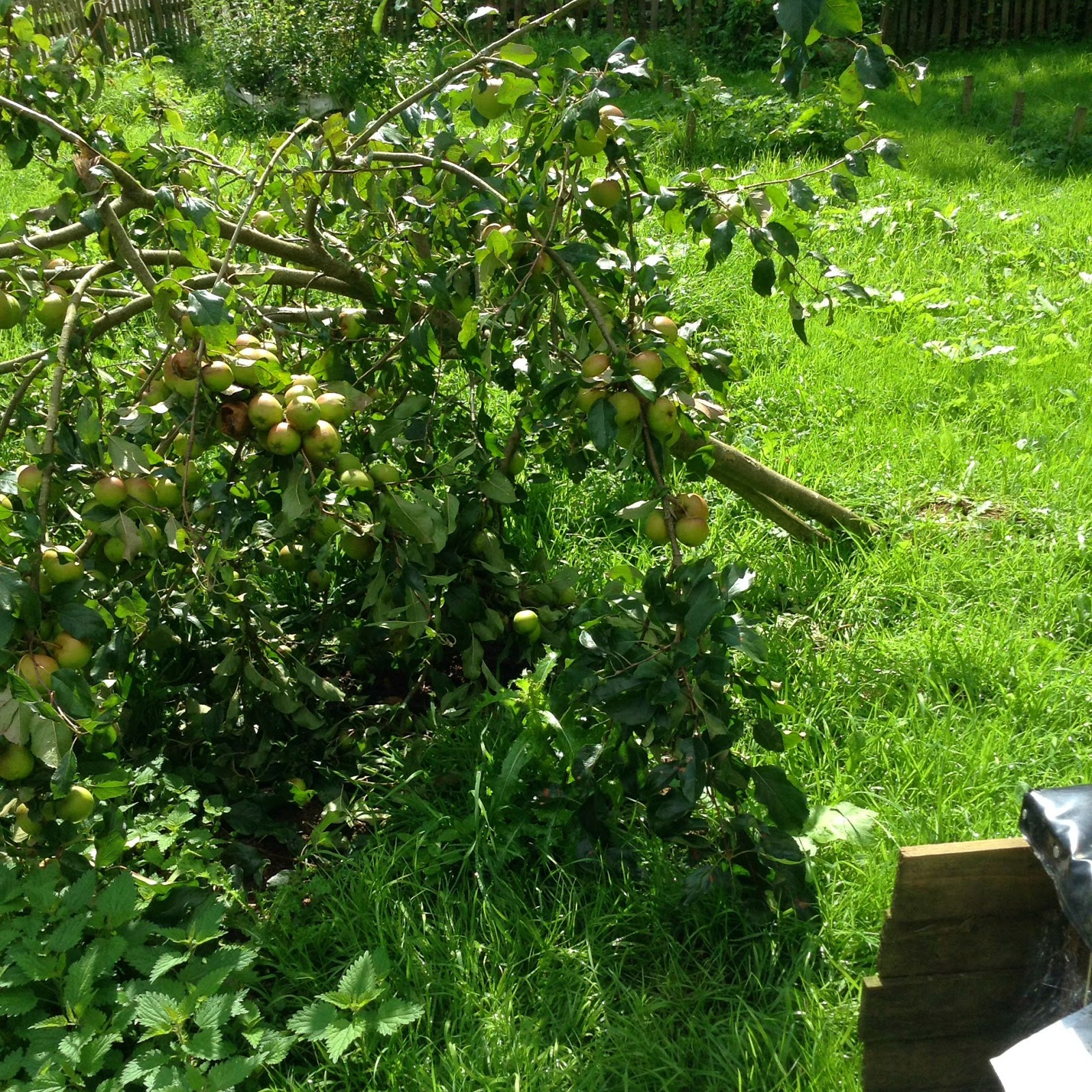 how to stop cnails off my fruit trees