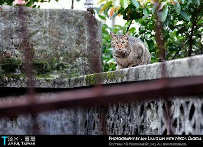 Vedfolnir Tamsui+Danshui+Tanshui+of+Taiwan+River+Street+Cat 1