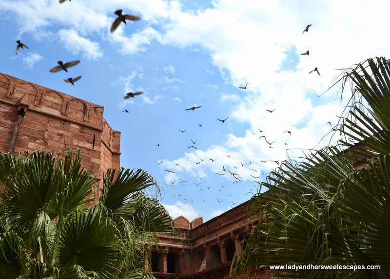 birds at Agra Fort