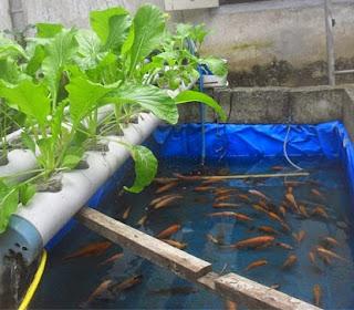 cara budidaya ikan, resensi di kolam terpal,nila pdf,cara budidaya ikan patin kolam terpal,gurame,kolam terpal,kolam beton,nila merah,