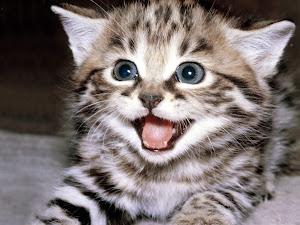 Kucing yg sangat comel