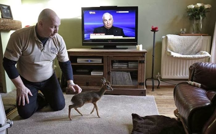 Baby antelope makes big impression at Chester Zoo