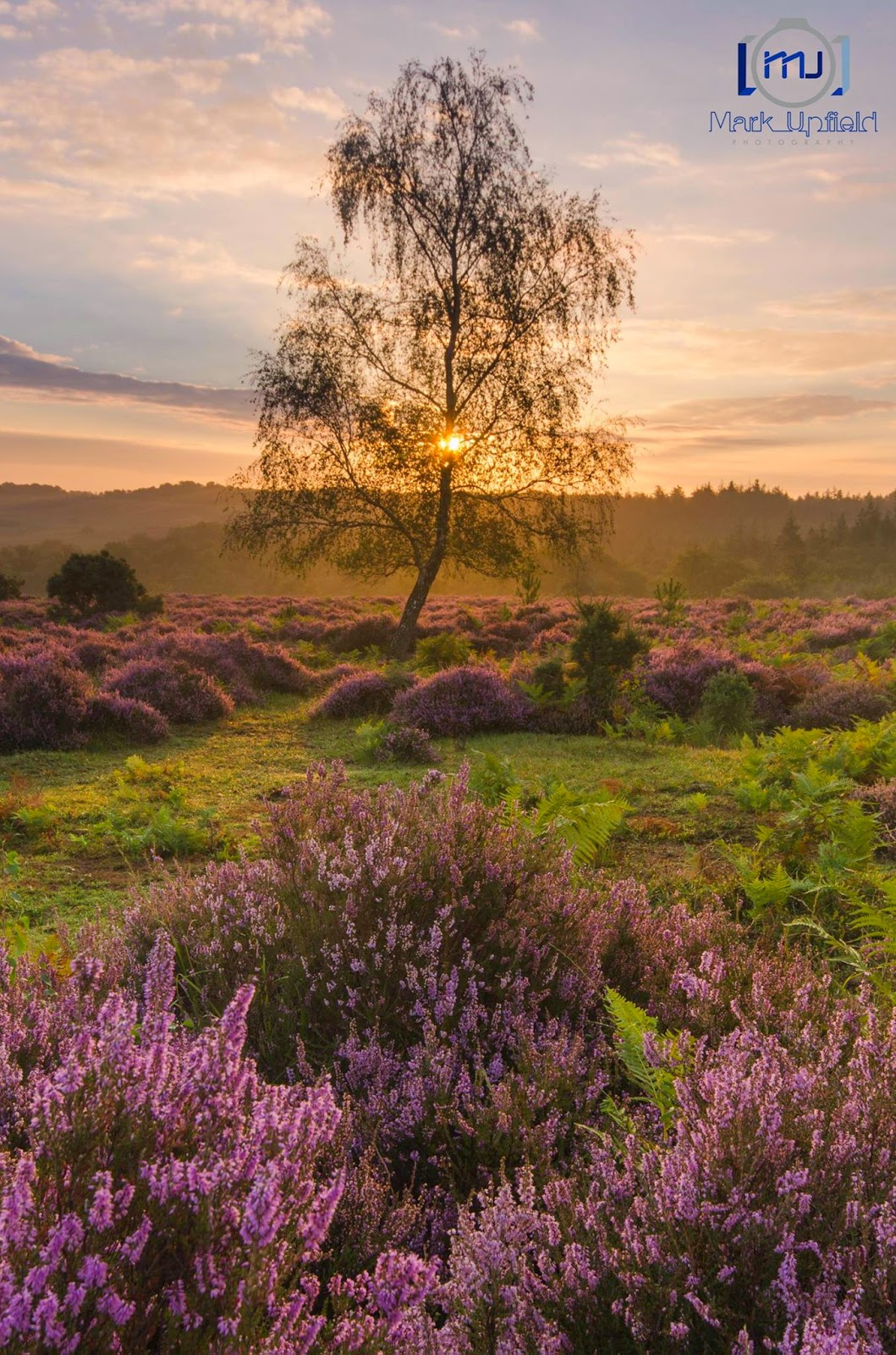Mark Upfield photo of New Forest