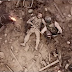 El mejor amigo ayuda a veteranos de guerra