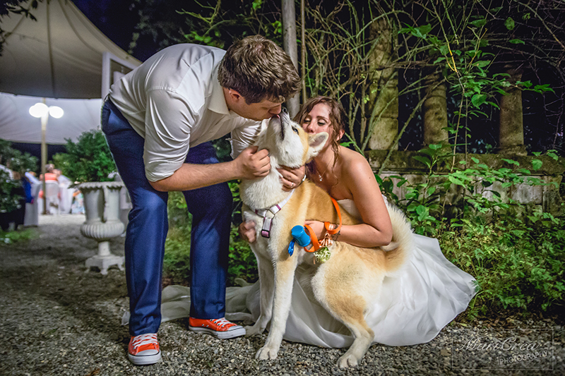 Bride, groom and their dog