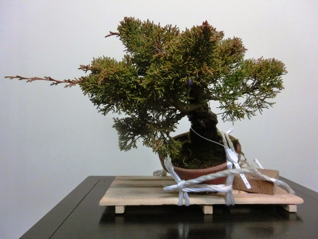 Invitation To Bonsai World Learning From Troubled Tree