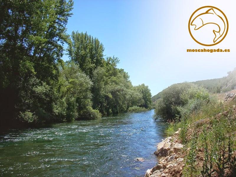 río esla, cistierna, leon, pesca, pesca a mosca, truchas