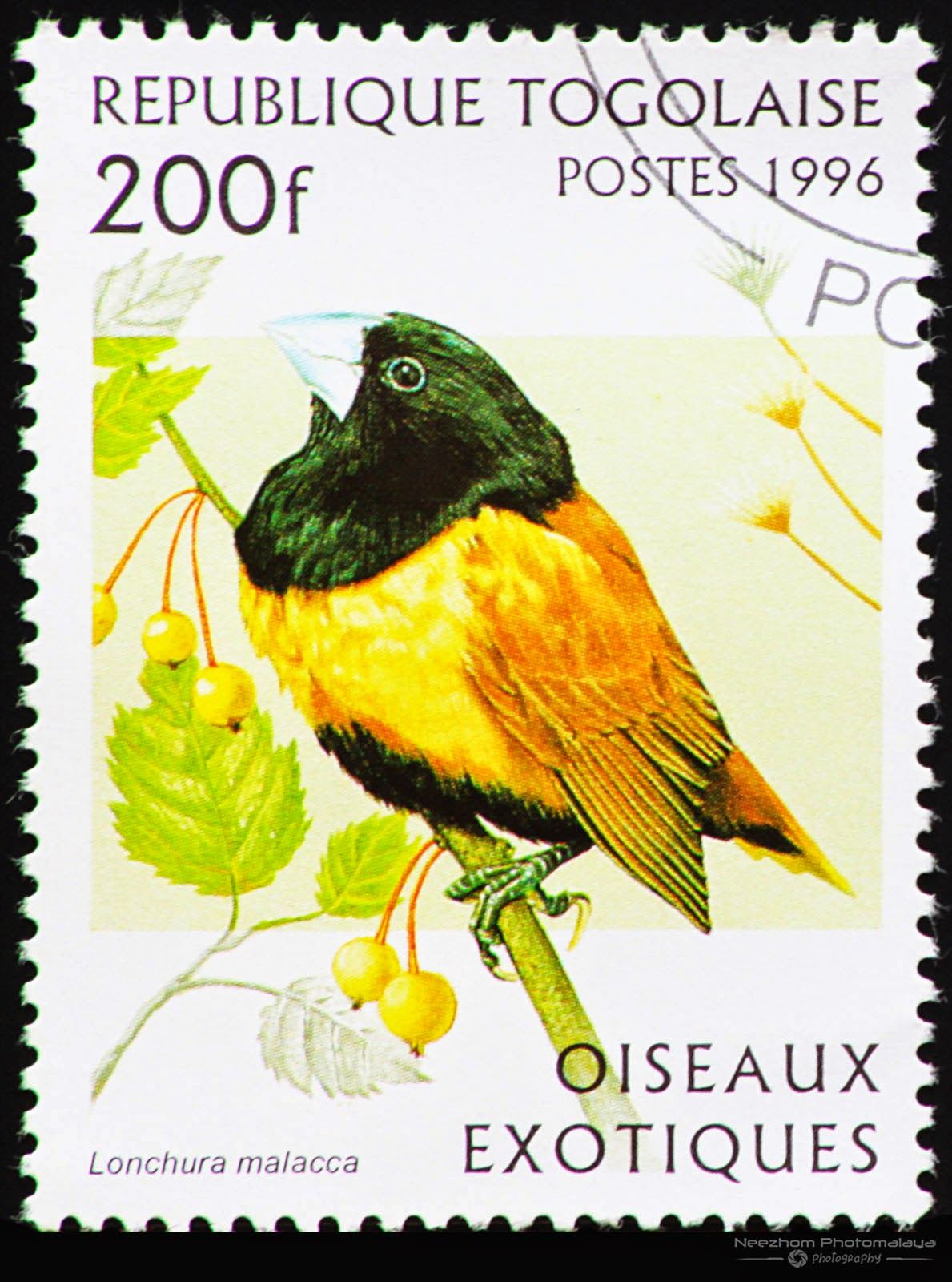 Togo 1996 Exotic Birds stamp - Tricoloured Munia (Lonchura malacca) 200 f