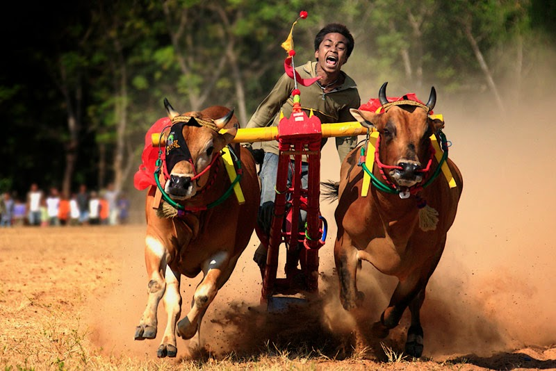 Bull Race Style India