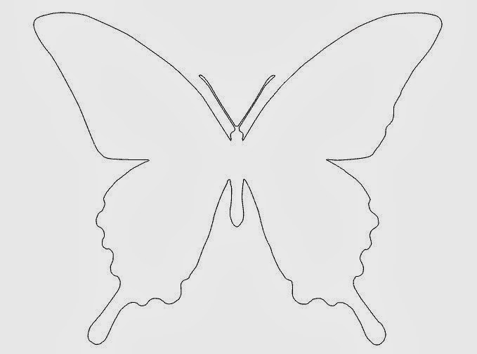 Бабочки 77