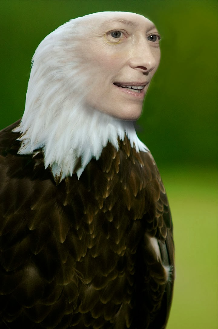 tilda-swinton-bald-eagle, tilda-swinton-animal, tilda-swinton-bird