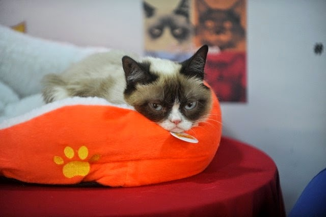 Grumpy Cat, el gato más rico del mundo.