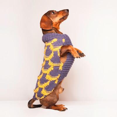Jersey para perro modelo Japón Azul/Mostaza