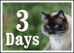 Only THREE days until we walk the walk for homeless cats and kittens!