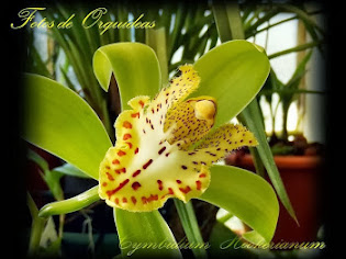 Fotos de orquídeas. Album nº-4