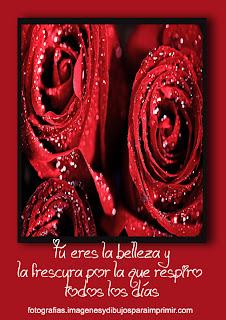 belleza y frescura Fotos de rosas rojas para facebook