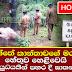 Kotakethana woman's cause of death revealed