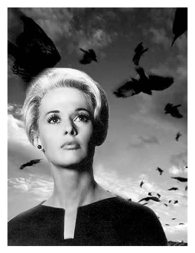 actress Tippi Hedren in Hitchcock's THE BIRDS
