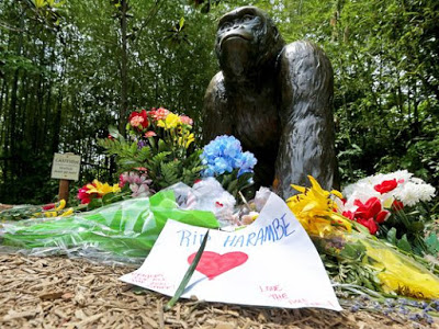 The Cincinatti Zoo Wants You To Help Stop The Harambe Memes