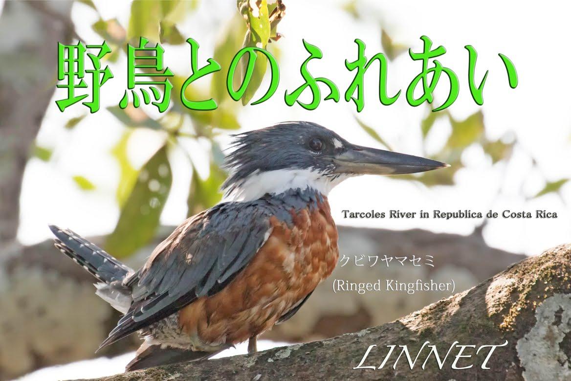 Contact With Wild Birds/野鳥とのふれあい