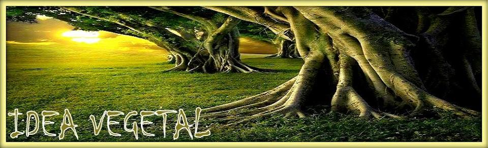 Liberación del cuerpo y la mente Idea Vegetal