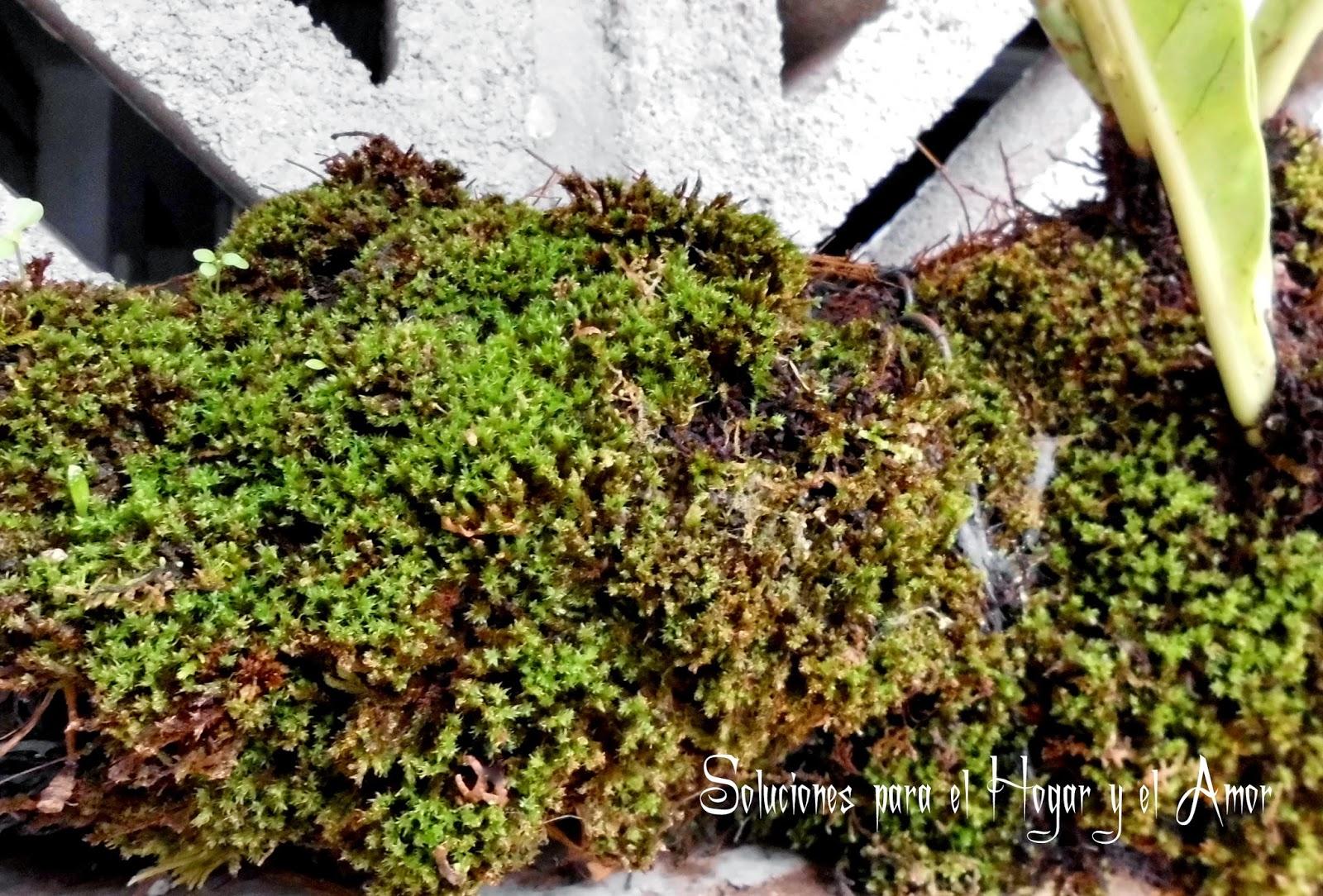 Plantas y Flores, Musgo Verde