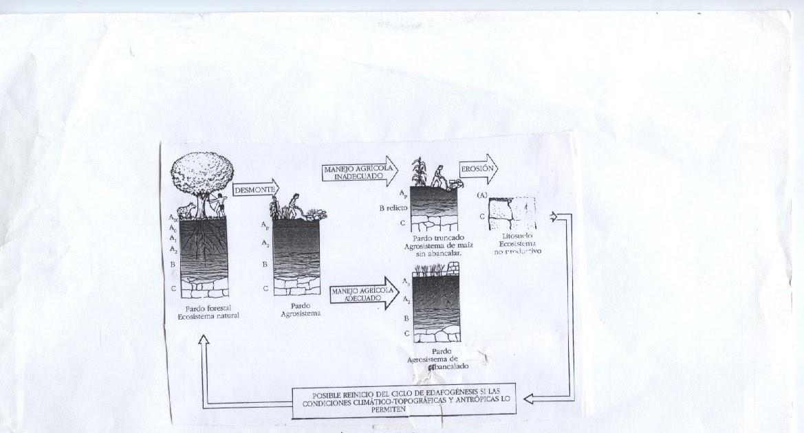 Formaci n en jardiner a el perfil del suelo agr cola for Formacion jardineria