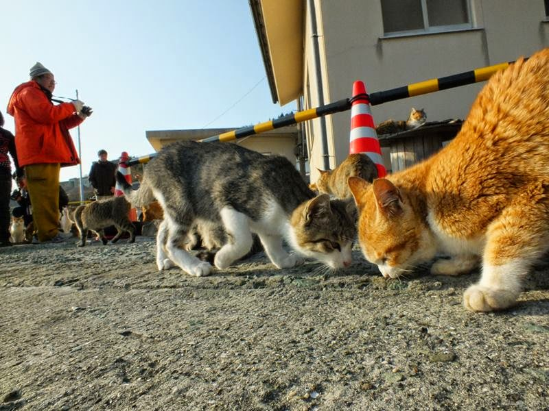 Aoshima, The Cat Island, is a small island into Ozu City, Ehime Prefecture, is a small, unpretentious island in the Seto Inland Sea of Japan.