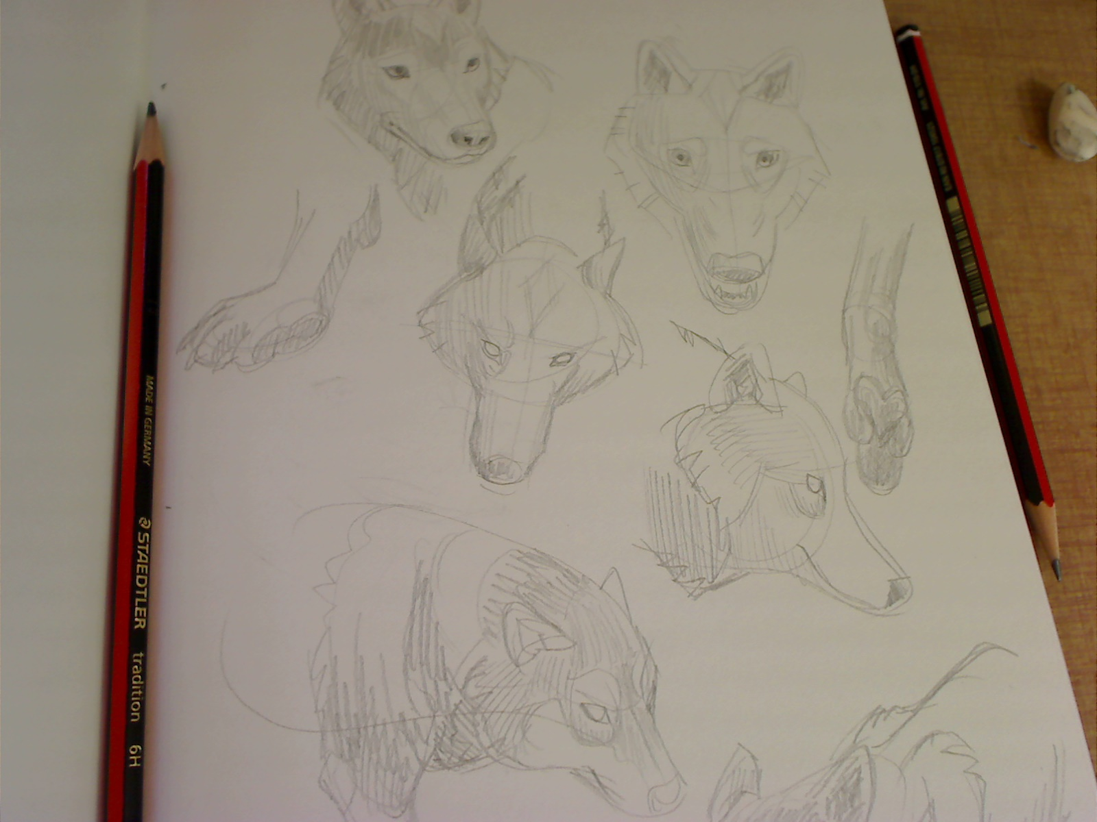 quick grab of wolf studies in my sketchbook