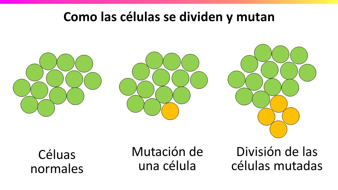 6.4 - El cáncer es un proceso de múltiples etapas | Nutrición y ...