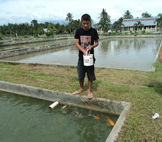 cara budidaya ikan nila Merah,panduan budidaya,di kolam beton,kolam terpal,harga meninggi budidaya ikan nila merah marak,