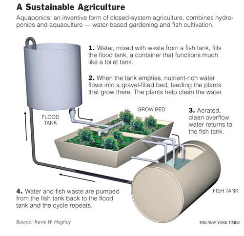 Aquaponics Growing System How To Build A Basic Aquaponics System