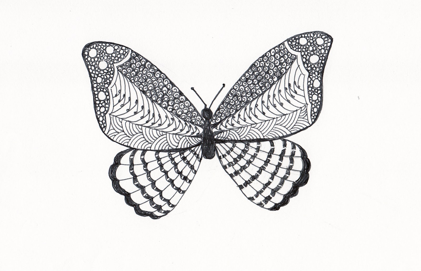 Simple zentangle butterfly images for Cool drawings of butterflies