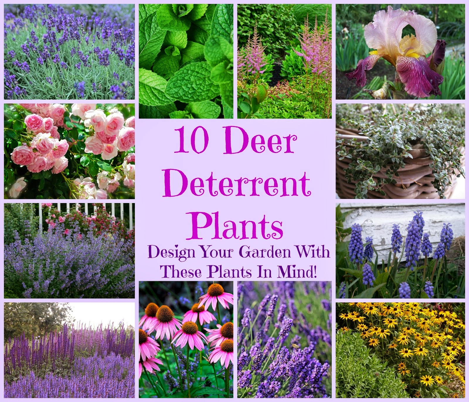 Vintage Country Style 10 Plants To Deter Deer