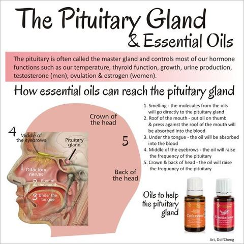 Our Journey Of Completionbodyheartsoul How Essential Oils Can