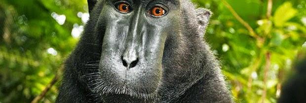Pocket Hobby - www.pockethobby.com - #HobbyNews - Selfie de Macaca e muito mais!!