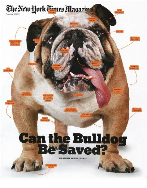 The New York Times Magazine Bulldog Cover