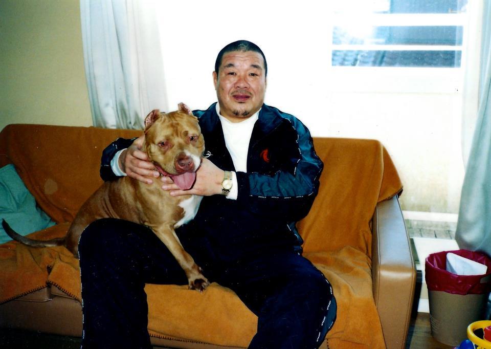 Resultado de imagen para 犬 pitbull 愛