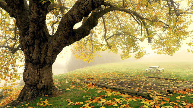 Autumn park scenery tree fog leaves HD Wallpaper