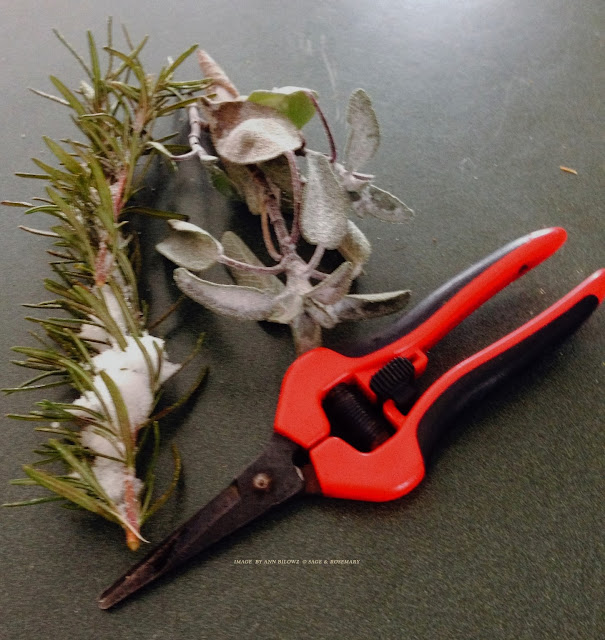 Sage & Rosemary Sprigs holding onto the recent snow