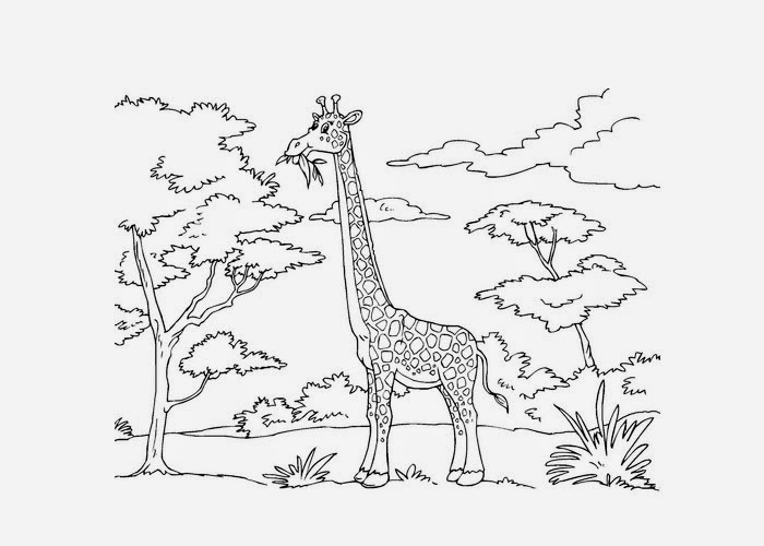 Jungle Giraffe Coloring Pages