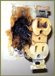 Fine Orlando Home Inspection Dangers Of Solid Branch Aluminum Wiring Wiring Digital Resources Cettecompassionincorg