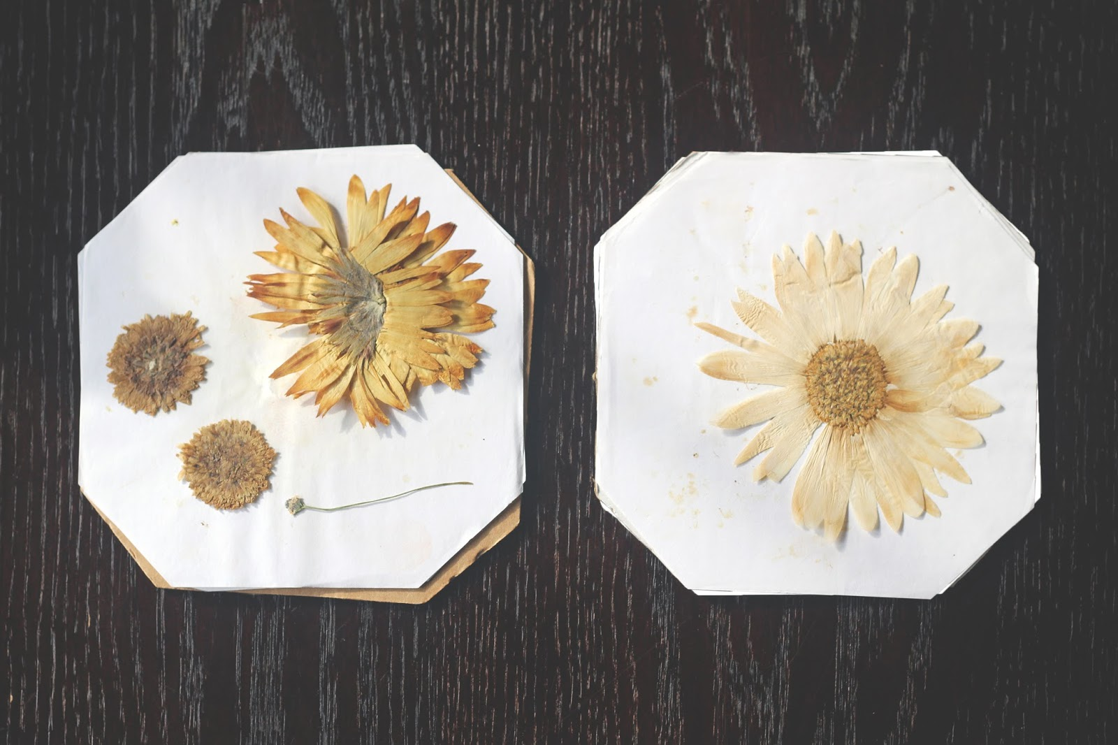We Can Make Anything Pressed Flowers