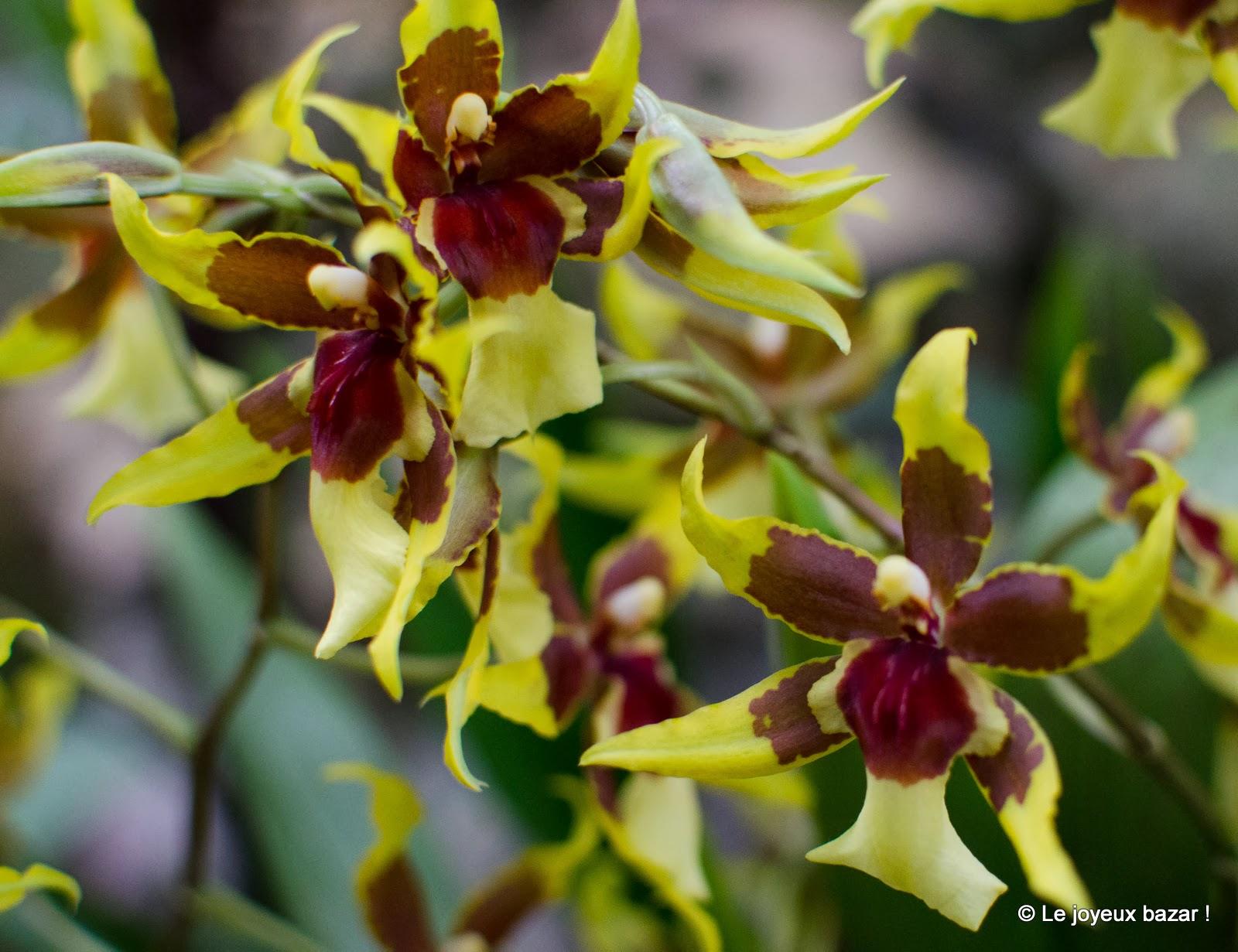 Mille et une orchid es au jardin des plantes paris for Plante au jardin