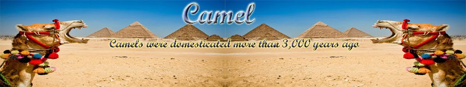 All about Camel