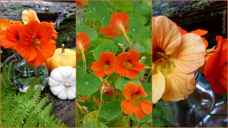 Despetitsriens3 des couleurs au jardin for Au jardin des couleurs