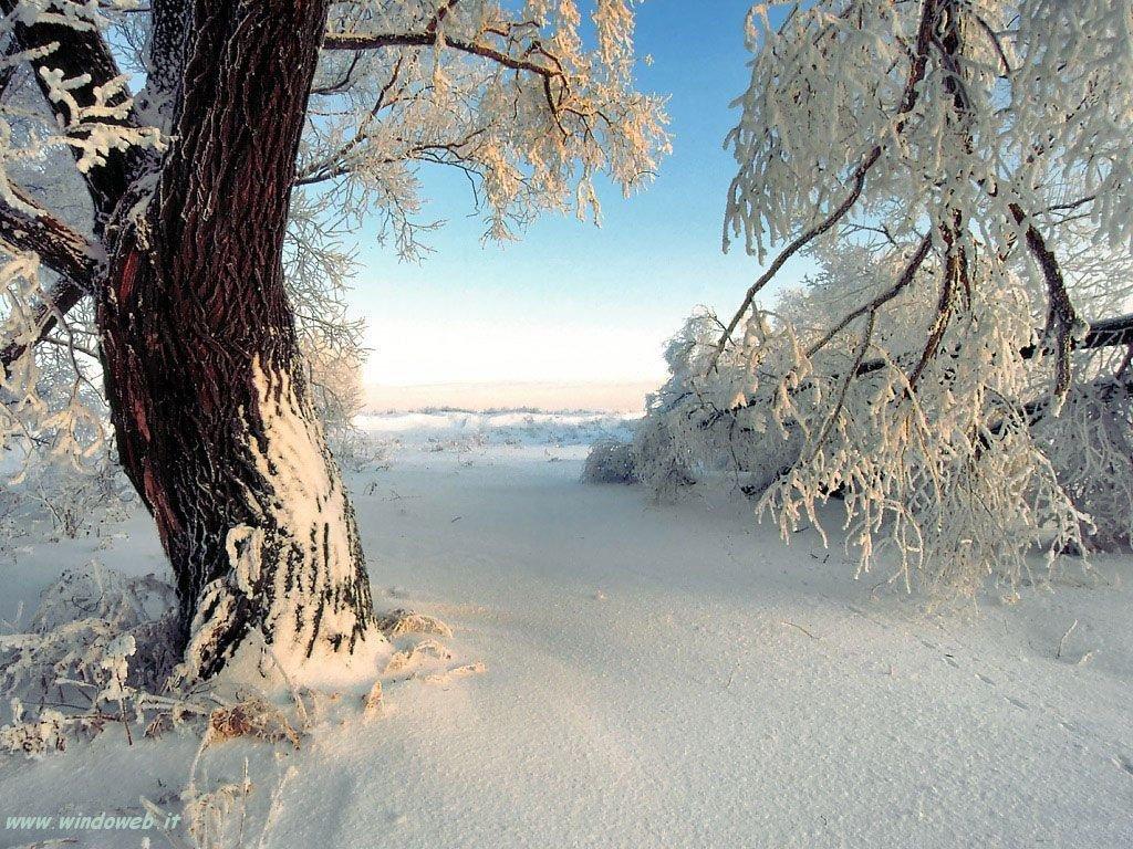 Punto di vista stefano la neve e l 39 uomo for Immagini inverno sfondi